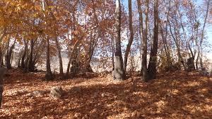 آتش سوزی های مشکوک در باغ های جنوبی استهبان
